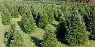 Christmas Tree Shipping via Intermodal Transportation