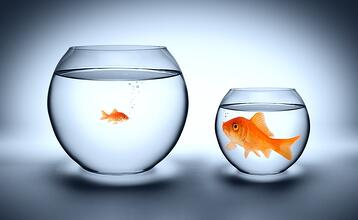 tiny fish in a big pond with any freight broker